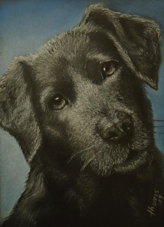 Click image for larger version  Name:Charcoal dog.jpg Views:10 Size:49.1 KB ID:608116