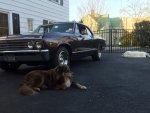 67 Chevrolet Chevelle Malibu